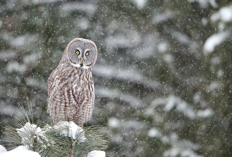 snowfall gray