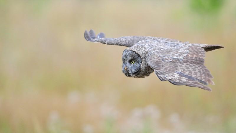 gray glide