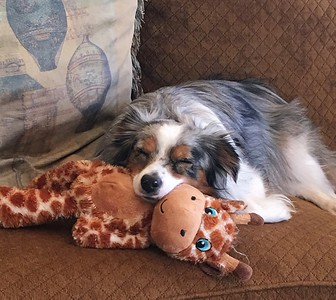 Bella with her favorite toy