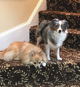 Our Jewelry Mascots!  Cooper and Bella