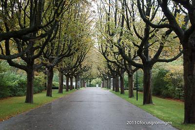 nederland 2011, groningen, iepenlaan, selwerderhof