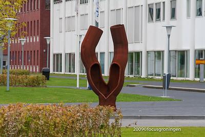 nederland 2009, groningen, zernike, zernikeplein, boom