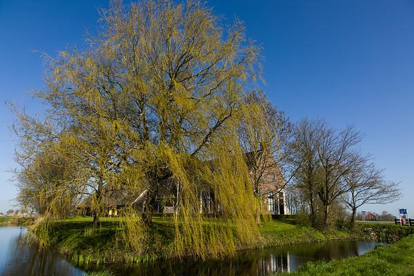 The village Pingjum in Friesland