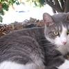 "<a href=""http://xenogere.com/meet-the-kitty/"" title=""Meet the kitty"">Blog entry</a>"