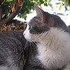 "<a href=""http://xenogere.com/meet-the-kitty/"" title=""Meet the kitty"">Blog entry</a>"