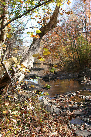 New Hope Creek in November