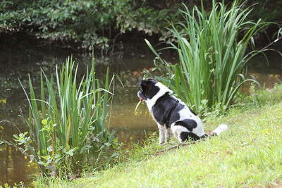 Bessie loves the Piney Mountain pond
