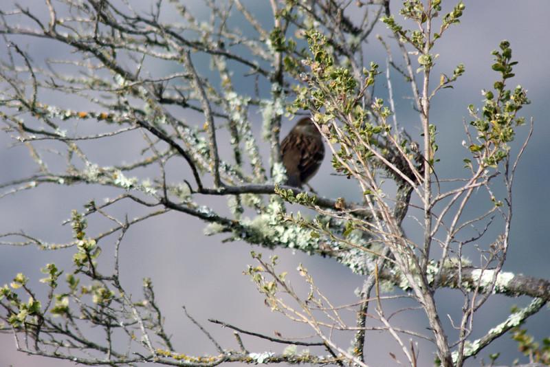 A bird in the bush