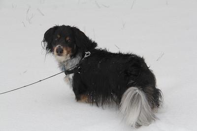 Tex likes the snow