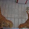 Stuffed giraffes