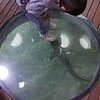 Small boy watching small shark