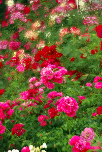 Roses in front of house across the street.  Double exposure.