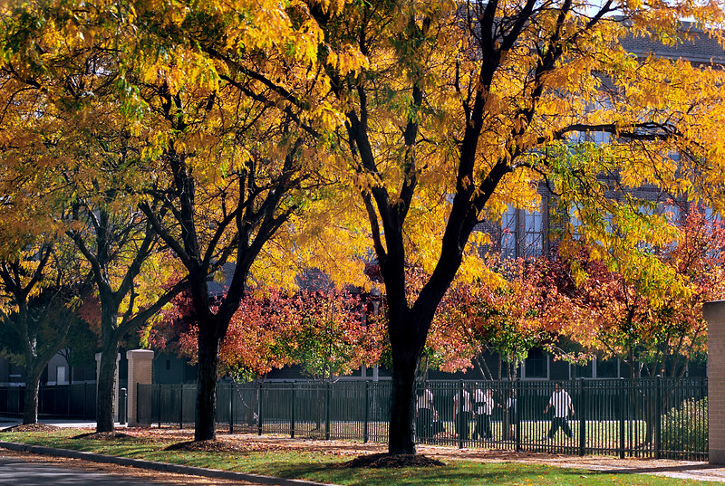 Kids playing under a tree with fall leaf coloring