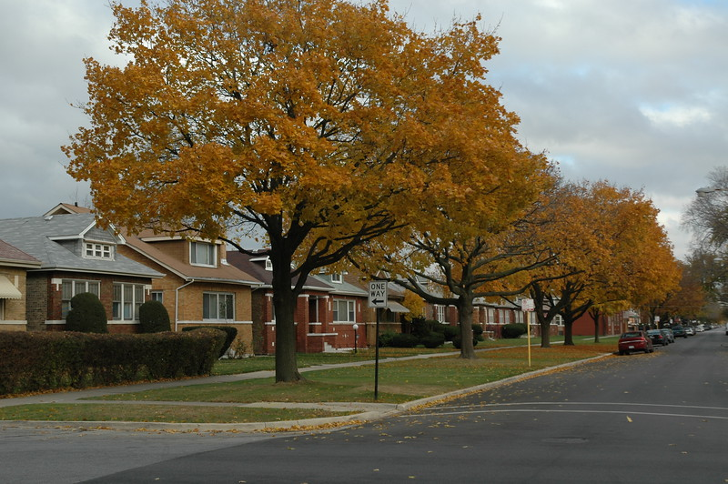 Fall in a Chicago Neighborhood