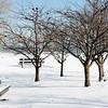 Chicago Park in Winter