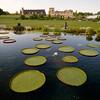 Garfield Park Conservatory Lagoon