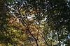 Afternoon leaf light