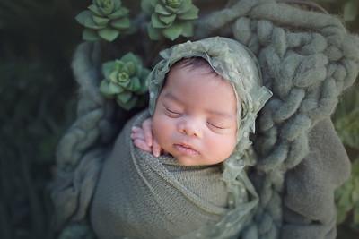 nellya collette newborn mini