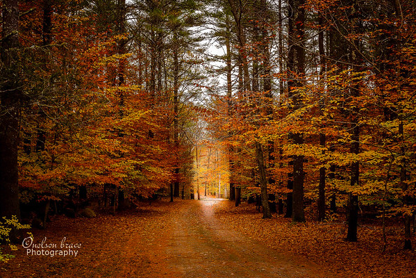 20151107a - A Path in the Woods