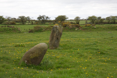 Glandy Cross