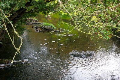 Wellow Brook  at Stoney Littleton