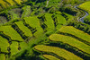 Rice Fields. Bhutan--October 2014--The People, Places, Culture