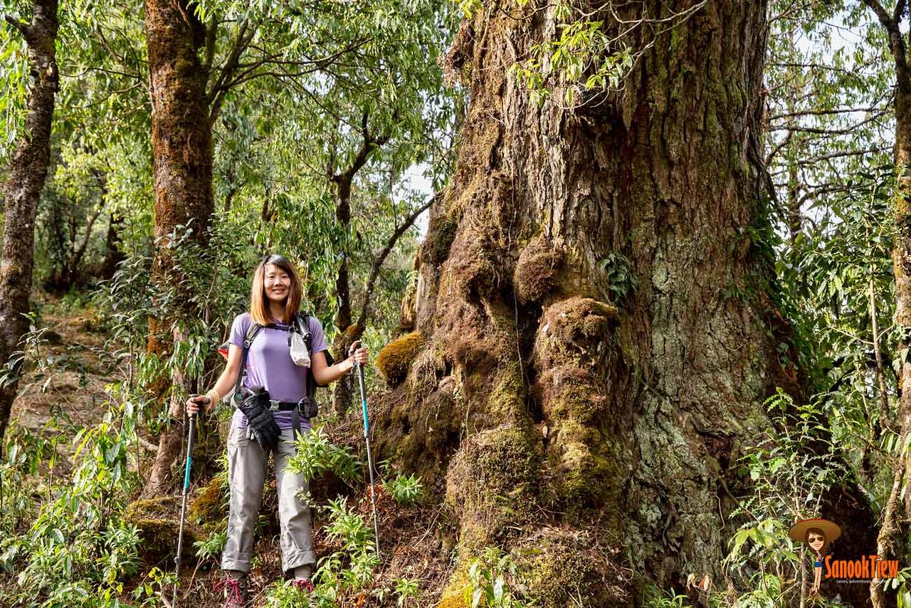 community trek; khopra trek; khopra danda; mohare trek; mohare danda Nepal trekking Nepal เทรคกิ้ง เนปาล