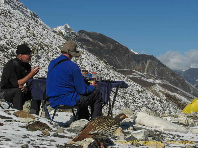 Paul, Rogier en Tetraogallus tibetanus