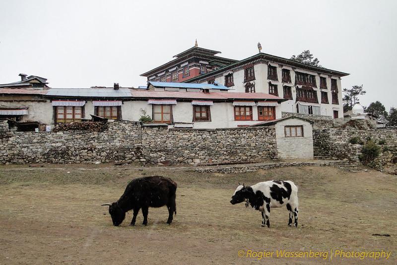 klooster van Tengboche