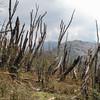 restanten van een bosbrand jaren geleden