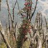 nieuw leven op een verbrande stam (rhododendron)
