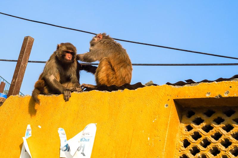 Seeing monkeys in Kathmandu, Nepal