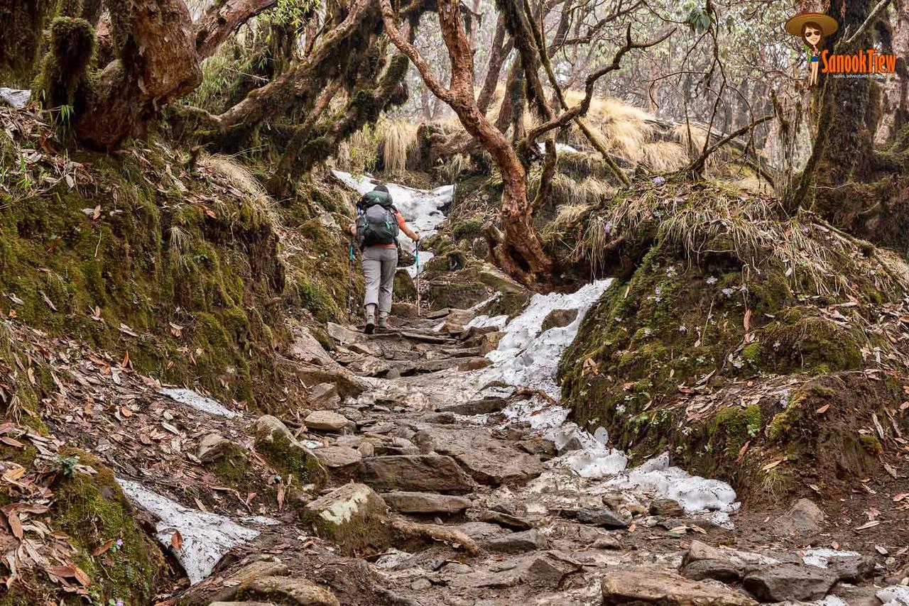Mardi Himal Forest Camp trekking Nepal เทรคกิ้ง มาดิฮิมาล เนปาล