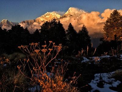 Niligiri, Annapurna I at the back and Annapurna South evening light just below Poon Hill