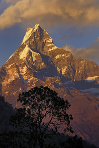 Machapuchare at sunset from Pothana on the Annapurna Base camp trek , Nepal
