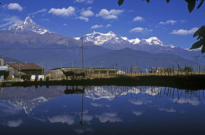 Machapuchare, Annapurna II and IV and Lamjung Himal from Dhampus village