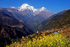 Annapurna South and Huinchuli as seen  from the mustard fields of Landrung- Annapurna Base Camp trek Nepal