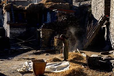 Threshing grain in Nar village