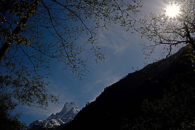 Machapuchare as seen from the forest between Bamboo and Sinuwa