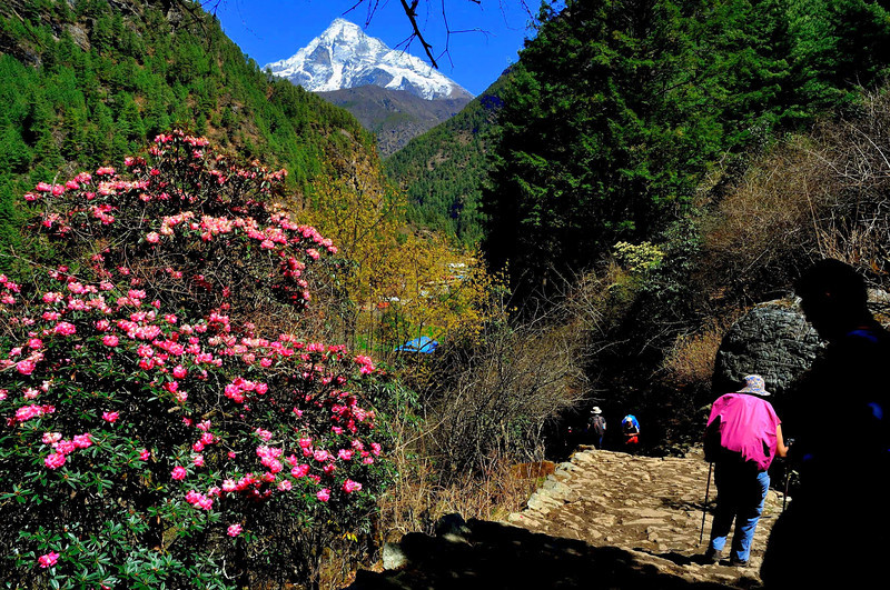 The trail between the Sagarmatha National Park headquarters and Jorsale. The flowers are Rhododendron Arboreum while the peak in the background is Khumbila.