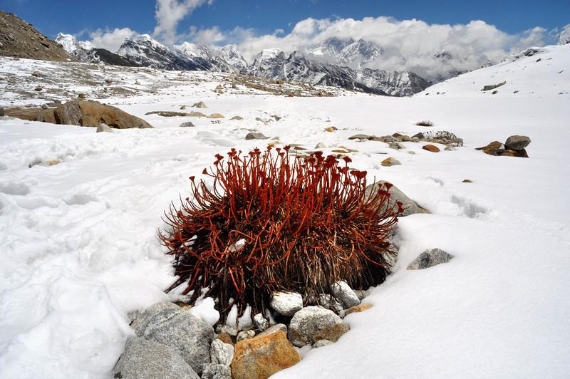 Snowfields below the Rhenjo La pass looking towards Everest