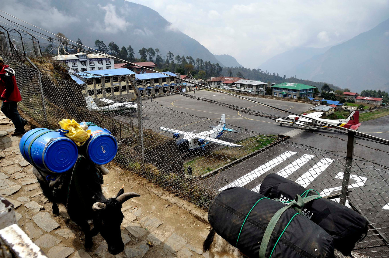 The flights land from Kathmandu at Lukla airport and then the yaks take over: carrying loads upto Everest Base Camp for the expeditions.
