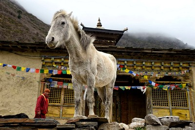 A monk and a pony at the entrance of Mu Gompa 3700 metres high up in the Tsum valley