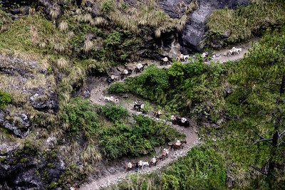 A mule caravan heads up the valley