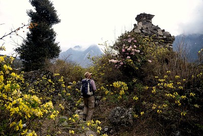 A chorten surrounded by spring blossoms on the trail near Choekhang Paro