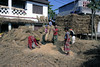 These women are thrashing the rice stalks to remove the grain.