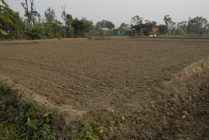 One of Dhiren's fields.