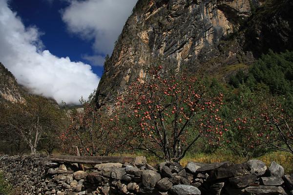 Jablka w Nepalu sa naprawde smaczne