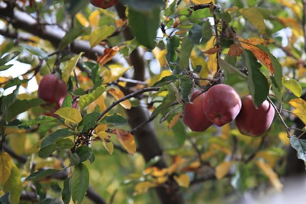 Foty z przystanku - jablka z rejonów Mersinga sa uzanwane za najlepsze w Nepalu.  Spotkaliśmy rodzinke z Kathmandu która chciała kupic 20kg żeby przewieźć samolotem do domu :)