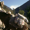Donkeys at Ulleri, 2073 m. 600 m above Tirkhedunga. Up and down, up and down ...